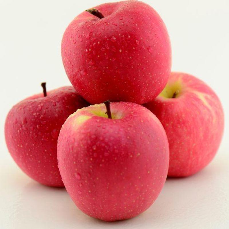 葫芦丝小苹果谱展示