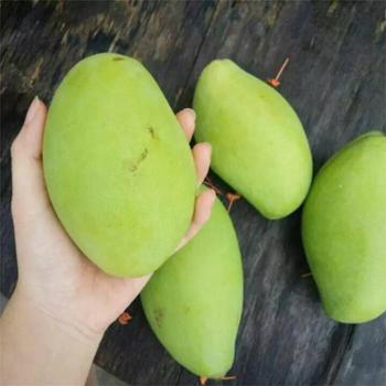 【鲜果来了】越南玉芒9斤装新鲜青皮芒果时令水果