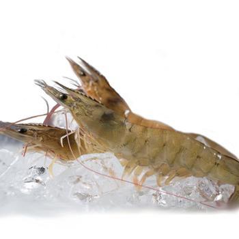 仙缘南美白对虾450g