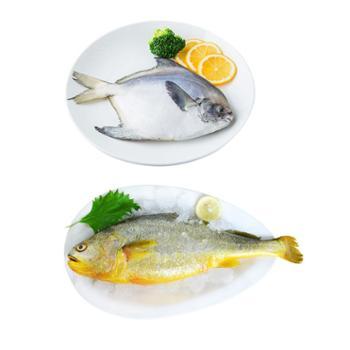 仙缘黄鱼鲳鱼300型