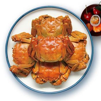 【全母大蟹】白荡里枞阳大闸蟹全母蟹3.0两8只