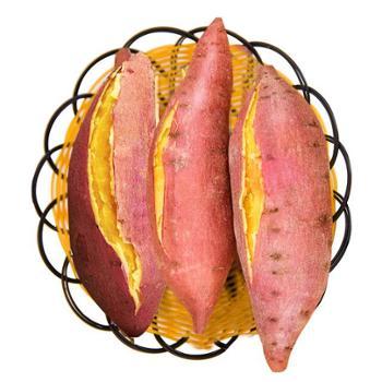 力智果园 湛江鸡蛋黄 板栗番薯 地瓜 5斤 8-15个