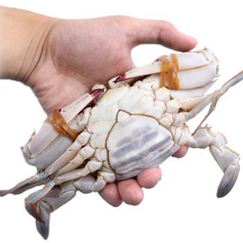 【特级】舟山野生新鲜特级梭子蟹东海开捕节3斤装红膏母蟹