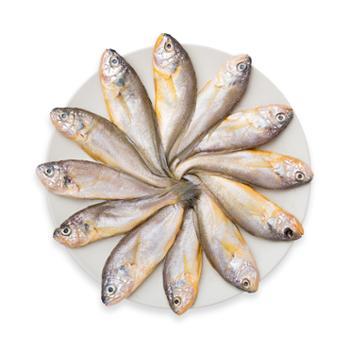 摩时渔鱼 舟山野生鲜冻小黄鱼3斤装(约10-12条/斤)