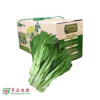 清远山区连州菜心单独装10斤(连箱),顺丰广东省内包邮